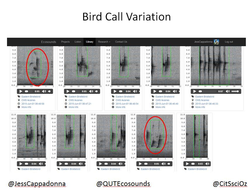 Examples of Eastern Bristlebird Call Variation